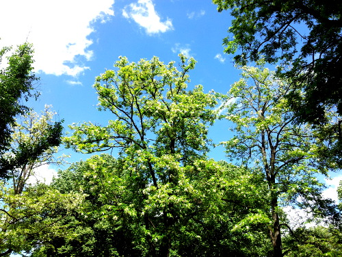 Himmel im Park