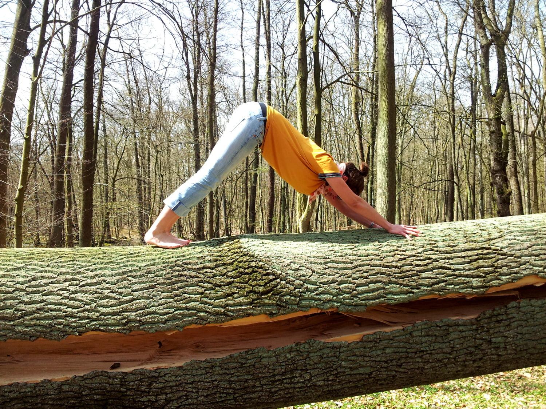 HSH auf Baumstamm