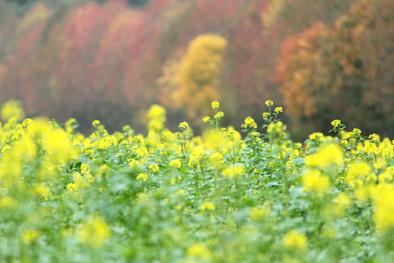 Herbstimpression Schloss Blumenthal