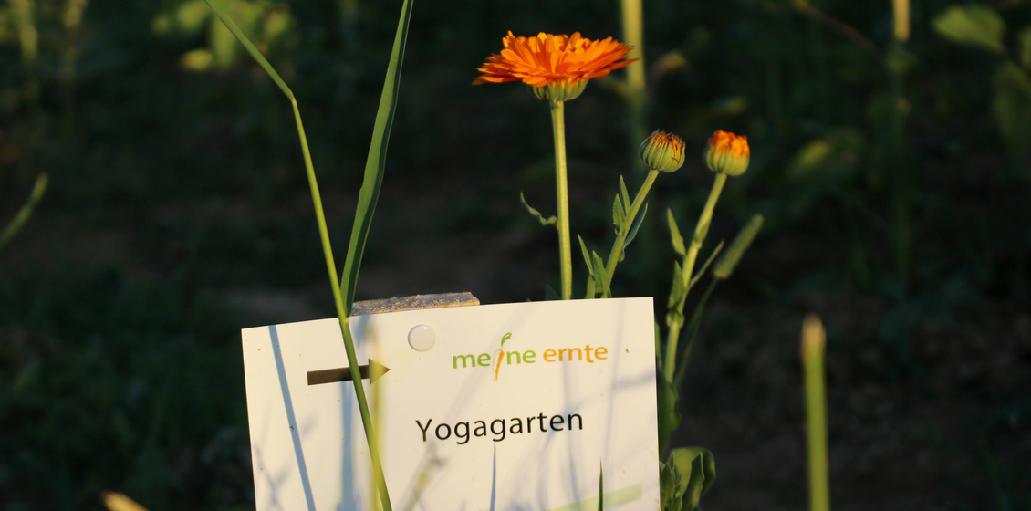 Yogagarten Meine Ernte